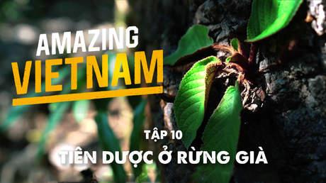 Amazing Vietnam - Tập 10: Tiên dược ở rừng già