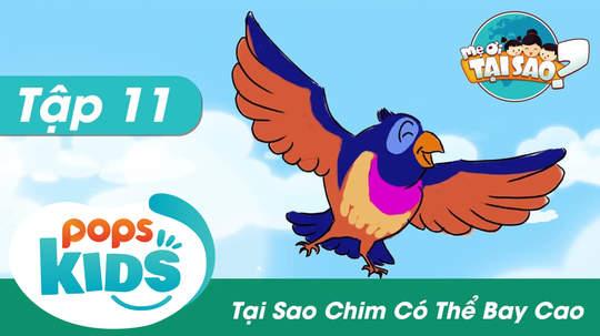 Mẹ ơi tại sao - Tập 11: Tại sao chim có thể bay cao?