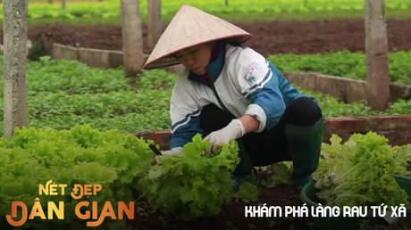 Nét đẹp dân gian - Khám phá làng rau Tứ Xã